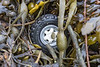 Toy wheel in the seaweed strand line on the shore of Fermain Bay on Guernsey's east coast on 11th February 2021