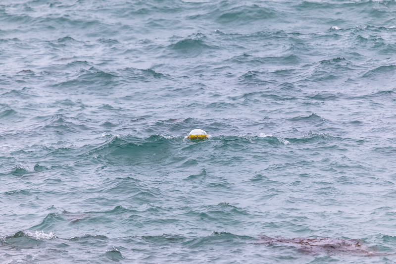 Partially inflated Helium balloon being blown towards the sea shore at Petit Port on Guernsey's south coast