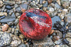 Plastic ball on the sea shore at Saints' Bay on Guernsey's south coast on 14th February 2021