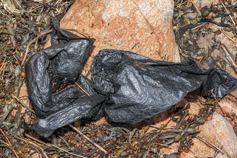 Black plastic bag piece at Petit Port on Guernsey's south coast on 17th February 2020