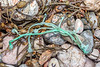 Knotted, braided polypropylene twine washed up at Petit Port on Guernsey's south coast on 26th February 2020