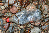 Coca Cola plastic bottle washed up at Petit Port on Guernsey's south coast on 26th November 2020