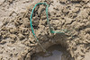 Braided polypropylene twine deeply embedded in the beach at Petit Port on the 28th May 2021