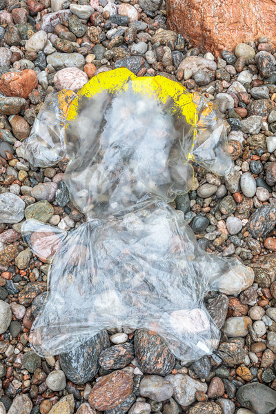 Partially deflated plastic Helium balloon washed up at Petit Port on 11 September 2019
