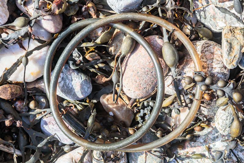 Plastic coated ring lock washed up at Petit Port on Guernsey's south coast on 7 March 2019