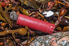 Plastic shotgun cartridge case in the seaweed strand line at Petit Port on Guernsey's south coast on 10th March 2020