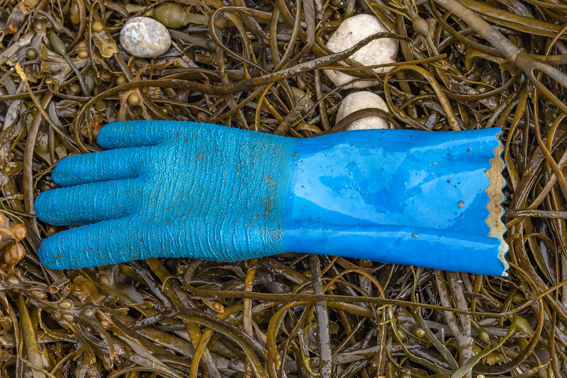 Blue rubber glove from the highest seaweed strand line at Petit Port on Guernsey's south coast on the 7th October 2021