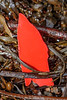 A piece of red hard plastic in the seaweed strand line at Petit Port on 11th January 2020