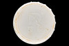 Plastic container lid with Asian writing picked up from the sea shore by Lisa Smart