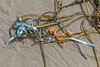 Balloon litter on the lower shore of Petit Port on Guernsey's south coast on the 26th May 2021
