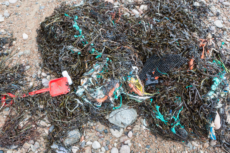 Plastic litter in the seaweed strand line at Petit Port on Guernsey's south coast on 16th January 2014