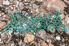 A cut section of fishing net washed up at Petit Port on Guernsey's south coast on 21st January 2021
