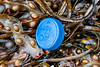 Oasis plastic bottle top on the seaweed strand line at Petit Port on Guernsey's south coast on 8th October 2019
