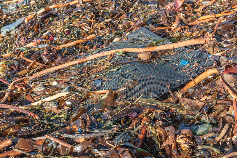 Hard plastic mesh bag washed up at Champ Rouget, Chouet on Guernsey's north coast on 4th February 2014