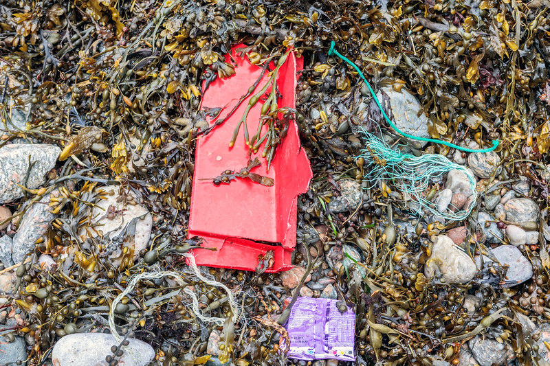 Seaweed strand-line litter from a 7.5 metre tide at Petit Port on Guernsey's south coast on 3rd March 2019