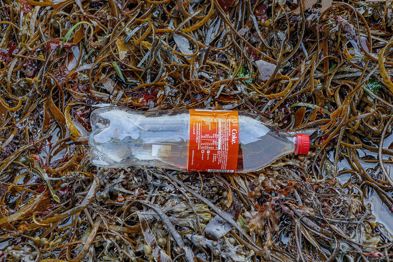 Coca Cola plastic bottle washed up on the seaweed strand line at Petit Port on Guernsey's south coast on 10th October 2019