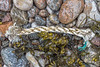Braided rope on the seaweed strand line at Petit Port on Guernsey's south coast on the 25th March 2021
