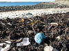 Marine litter on the stand line on the sea shore at Champ Rouget, Guernsey