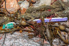 Colgate toothbrush & frayed twisted rope in seaweed strand line at Petit Port on Guernsey's south coast on 4th March 2020