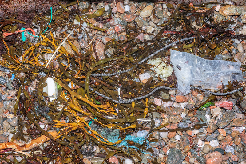 Seaweed strand line at Petit Port with twisted rope, braided polypropylene twine, and plastic film on 10th March 2020