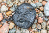 Lump of tar with nurdle stuck to it on the shore at Petit Port on 4th October 2020