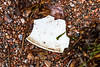 Hard white plastic piece washed up at Petit Port on Guernsey's south coast on 8th July 2020