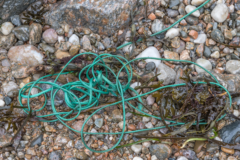 Polyethylene twine washed up in the seaweed strand line at Petit Port on Guernsey's south coast on 21st January 2021