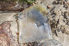 Plastic pouch dug out of the sand on the lower shore of Petit Port on Guernsey's south coast on the 28th May 2021
