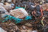 Commercial fishing litter in the seaweed strand line at Petit Port on Guernsey's south coast on 12th January 2016