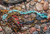 Plastic litter in seaweed strand line at Petit Port on Guernsey's south coast on 10th March 2020