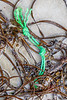 Twisted knotted rope washed up at Petit Port on Guernsey's south coast on 8th October 2019