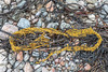 Section of commercial fishing net washed up at Petit Port on Guernsey's south coast on 1st October 2020