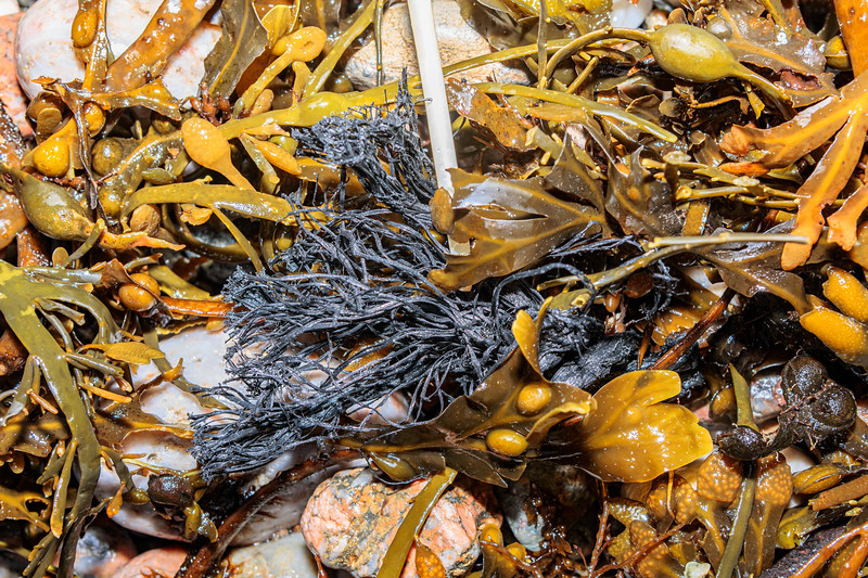 Frayed rope washed up at Petit Port on Guernsey's south coast on 2nd February 2020