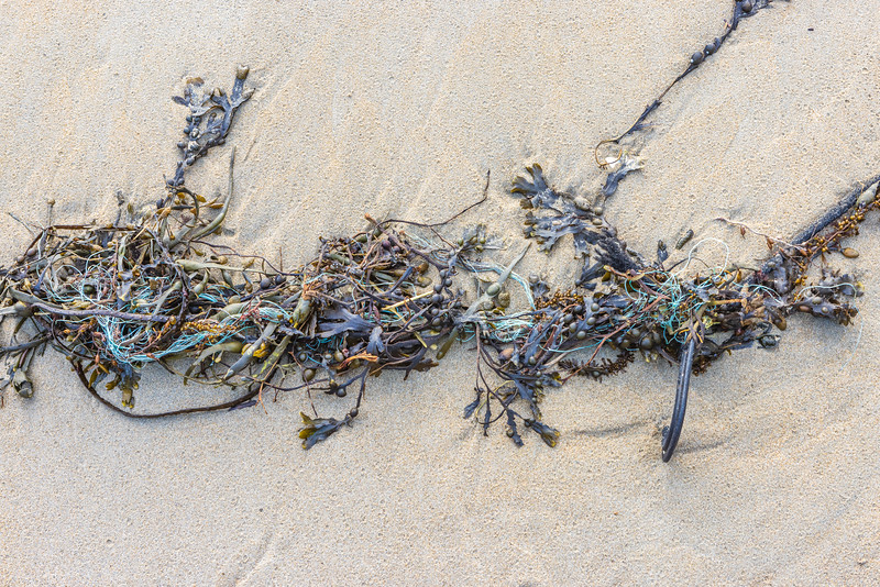 Seaweed with plastic rope threads, a shellfish pot hook, and a bungee cord washed up at Petit Port on 16th February 2021