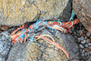 Frayed rope and twine in the western boulder field at Petit Port on Guernsey's south coast on 19th August 2020