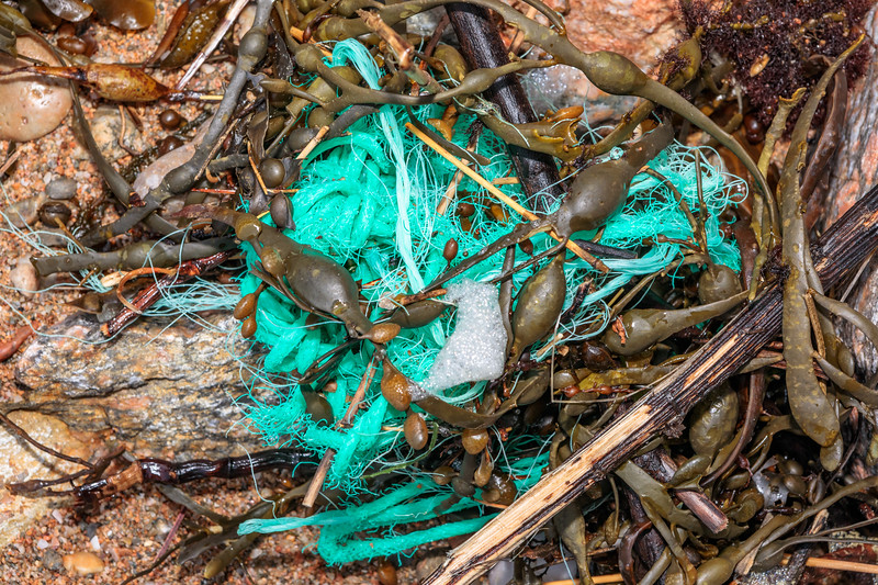 Polypropylene twine in the seaweed strand line at Petit Port on Guernsey's south coast on 17th February 2020