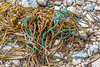 Polypropylene twine in seaweed strand line at Petit Port on Guernsey's south coast on 26th September 2019