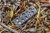 A stone crab trap latch from Florida, USA washed up at Petit Port on Guernsey's south coast on 2oth February 2020