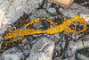 Piece of net washed up at Petit Port on Guernsey's south coast on 13th February 2020
