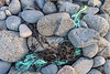 Fraying, twisted rope entangled in seaweed at Baie des Pecqueries on Guernsey's west coast on the 23rd January 2021