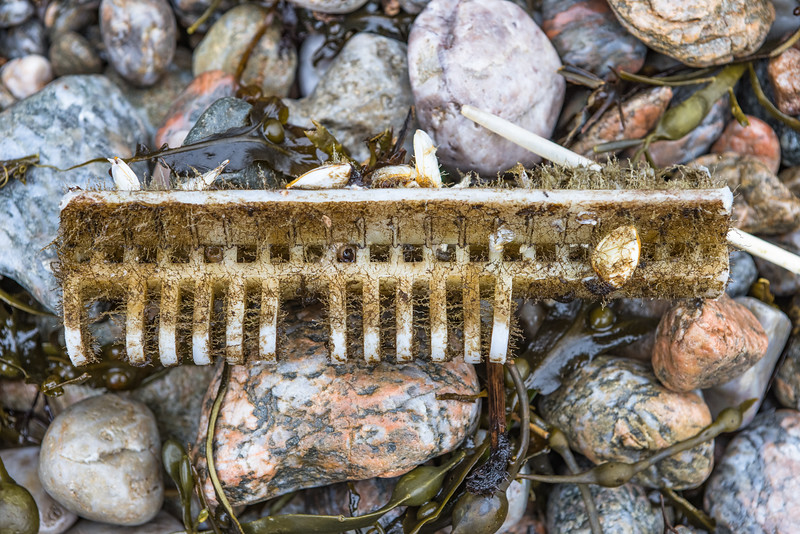 Plastic fish conveyor belt piece washed up at Petit Port on Guernsey's south coast on the 28th January 2021