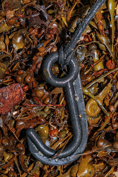 Hard plastic hook for closing crab & lobster pot doors at Petit Port on Guernsey's south coast on  2nd February 2020