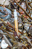 Fishing light stick washed up in the seaweed strand line at Petit Port on Guernsey's south coast on 4th October 2020