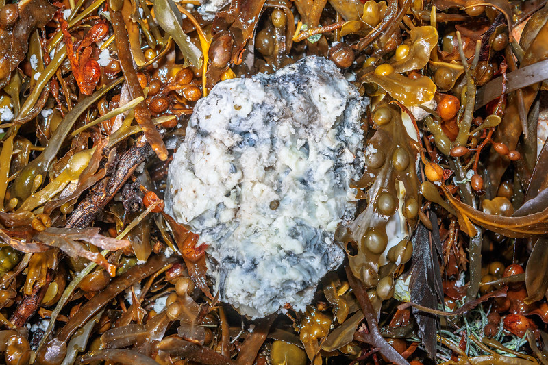 Lump of greasy, friable material in the seaweed strand line at Petit Port on Guernsey's south coast on 4th November 2019