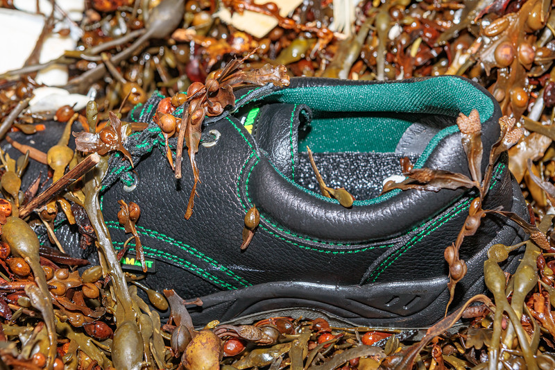 Workman's shoe at Petit Port on Guernsey's south coast on 16th December 2019