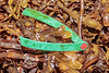 Maine lobster trap tag from Zone A from 2013 washed up at Petit Port on Guernsey's south coast on 26th October 2019