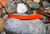 A plastic lobster trap tag from Maine, USA used in 2007 washed up at Petit Port on Guernsey's south coast on 4th March 2020
