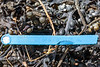 A 2012 Newfoundland and Labrador lobster trap tag at Petit Port on Guernsey's south coast on 30th April 2020