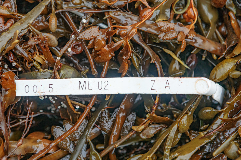 Maine lobster trap tag from Zone A in 2002 washed up at Petit Port on Guernsey's south coast on 14th January 2020