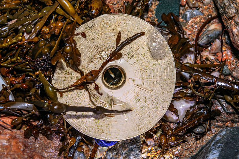An intact oyster spat collection dish washed up at Petit Port on Guernsey's south coast on 26th December 2019